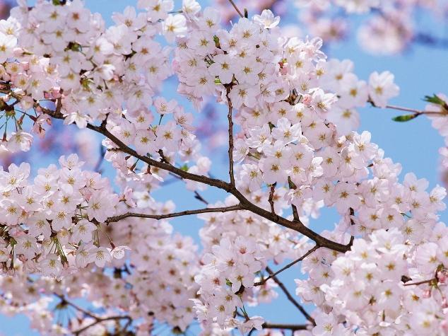 cvety 2